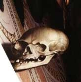 Skull-Ambassadors.jpeg