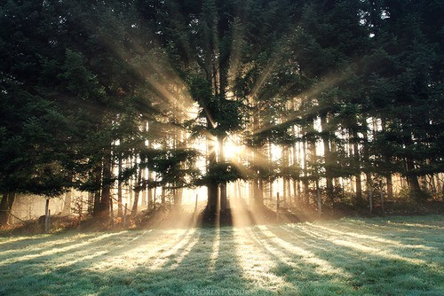 arbres,sous-bois,forêt,neige,frondaison,bois