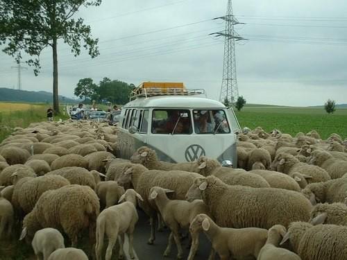 voyage,hippie,vw,volkswagen,road