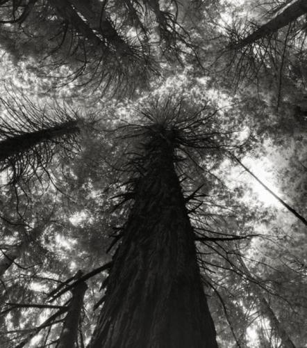 un-sequoia-du-parc-national-de-kings-canyon-situe-en-californie-aux-etats-unis_68653_w620.jpg