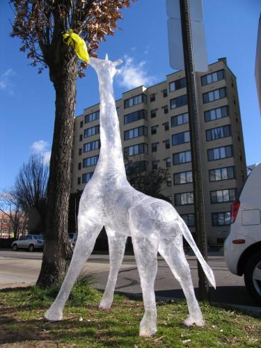 Tape_giraffe.jpg