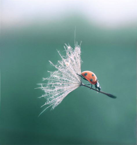 ladybug-dandelion-perfect-timing.jpg